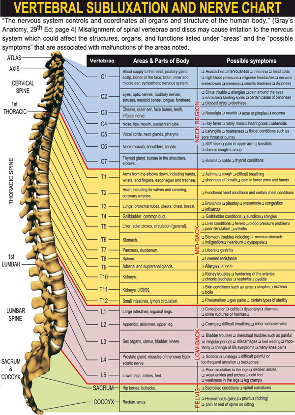 Subluxation Nerve Chart